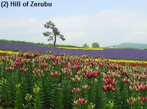 Hill of Zerubu