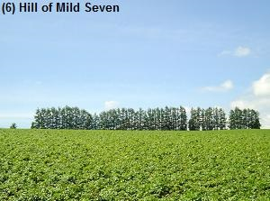 Hill of Mild Seven