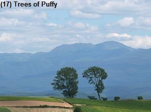 Trees of Puffy
