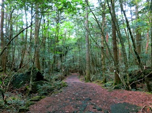 Forest in Aokigahara